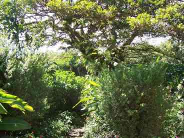 Casa Amarilla, Monteverde, Costa Rica