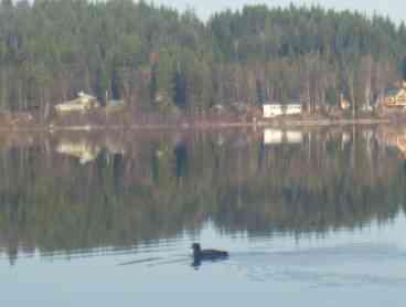 Horsefly Lakeside Cabin