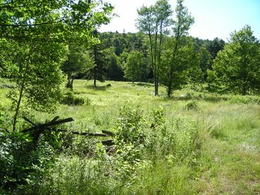 750 Acre (300 Hectare) Estate