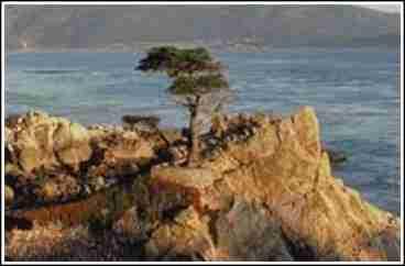 Monterey Dunes Beach Front Homes