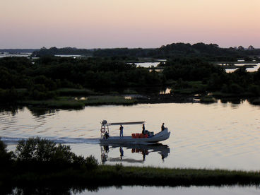 Birdwatchers' Delight - Tranquility in Cedar Key
