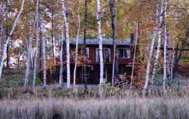 Birch Berry Cabin