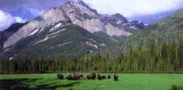 Rocky Mountain Buffalo Ranch Guest House