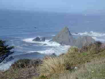 View The Cetusaurus at Irish Beach