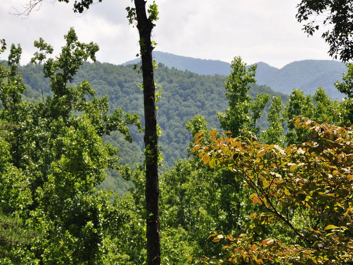 View Whispering Woods Cabin  Secluded