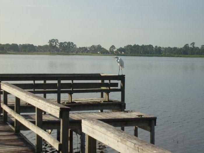 View Vista del Lago Home near Disney