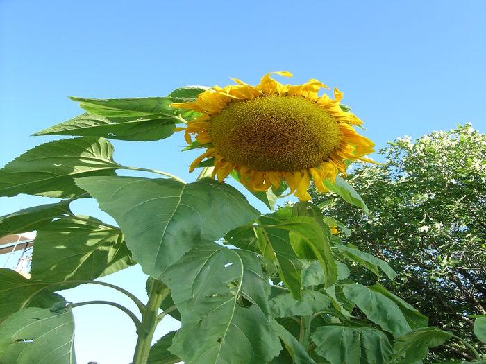 View Sunflower Vacation Rental