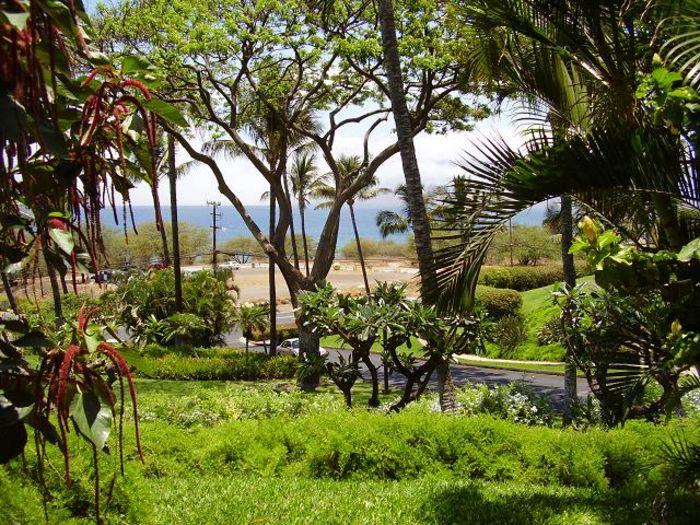 View Maui Kamaole A109  1b