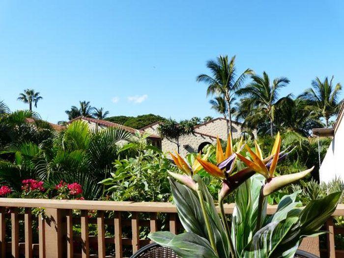 View Maui Kamaole D202  2b