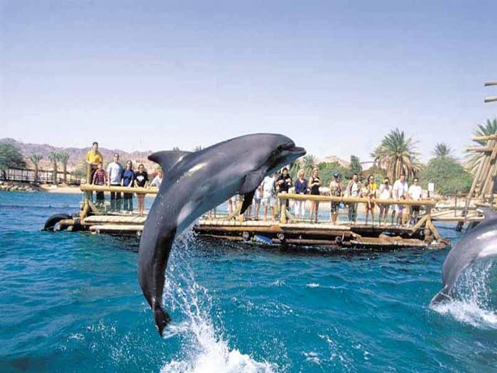 View EILAT  Dolphin Apartment at the