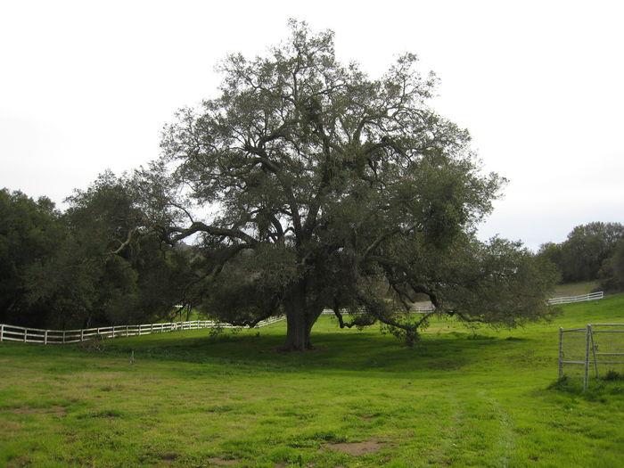 View Circle Oak Ranch