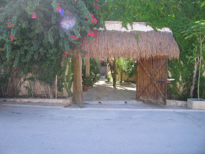 View Stone Tree Little Ceynot